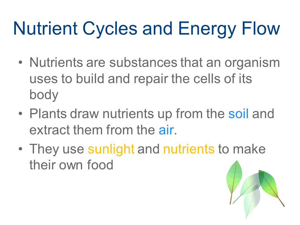Nutrient Cycles and Energy Flow Nutrients are substances that an organism uses to build and repair the cells of its body Plants draw nutrients up from the soil and extract them from the air.