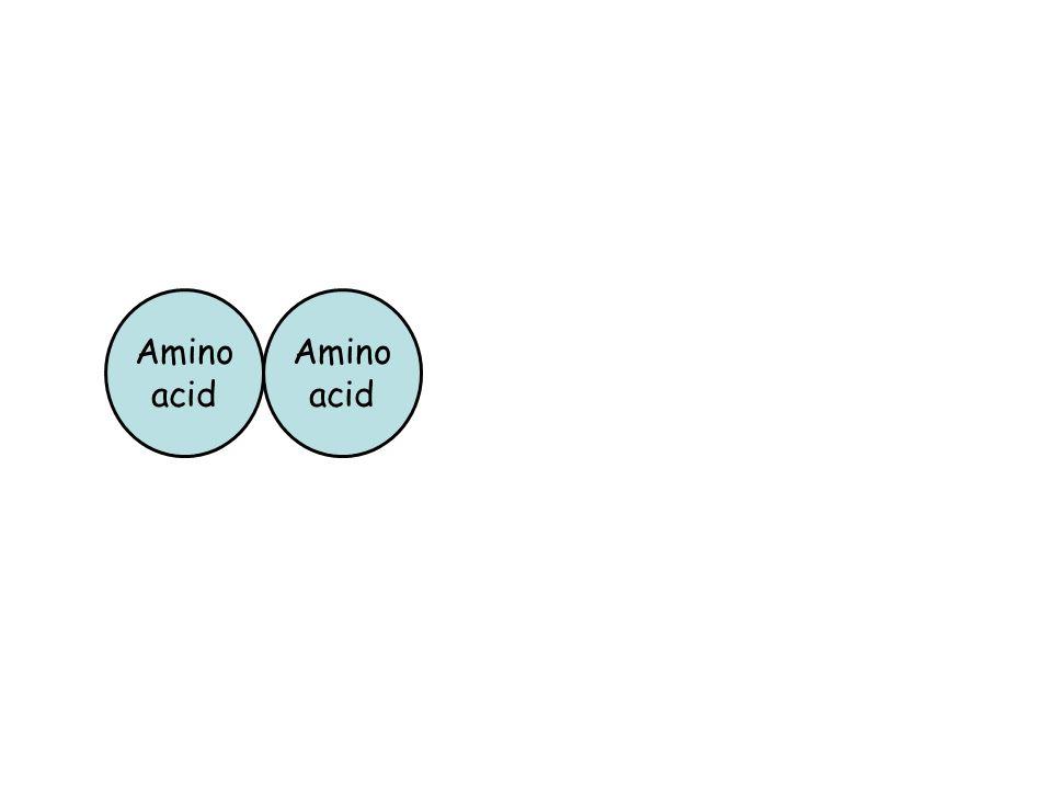 Amino acid Amino acid