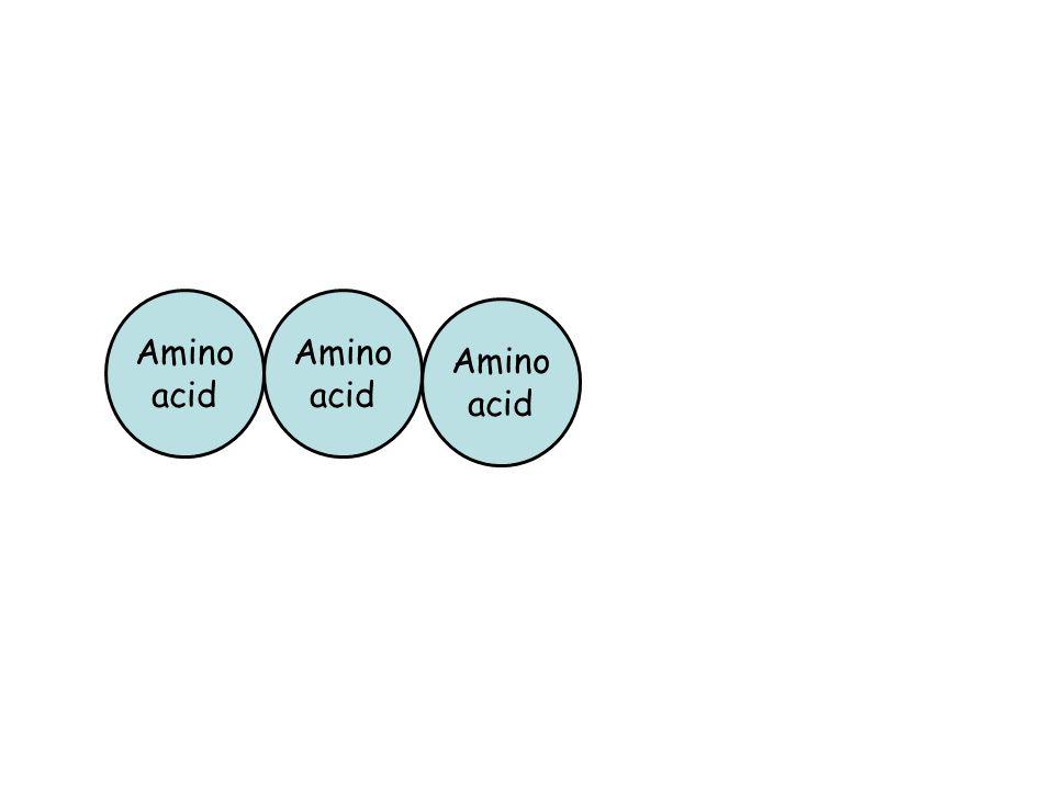 Amino acid Amino acid Amino acid