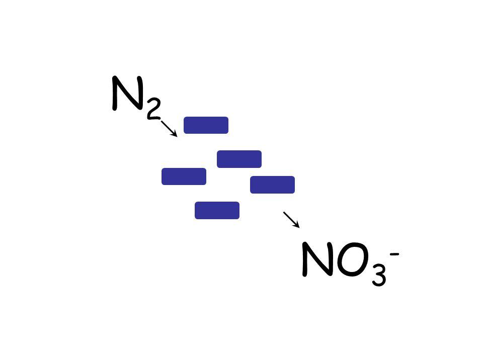 N2N2 NO 3 -