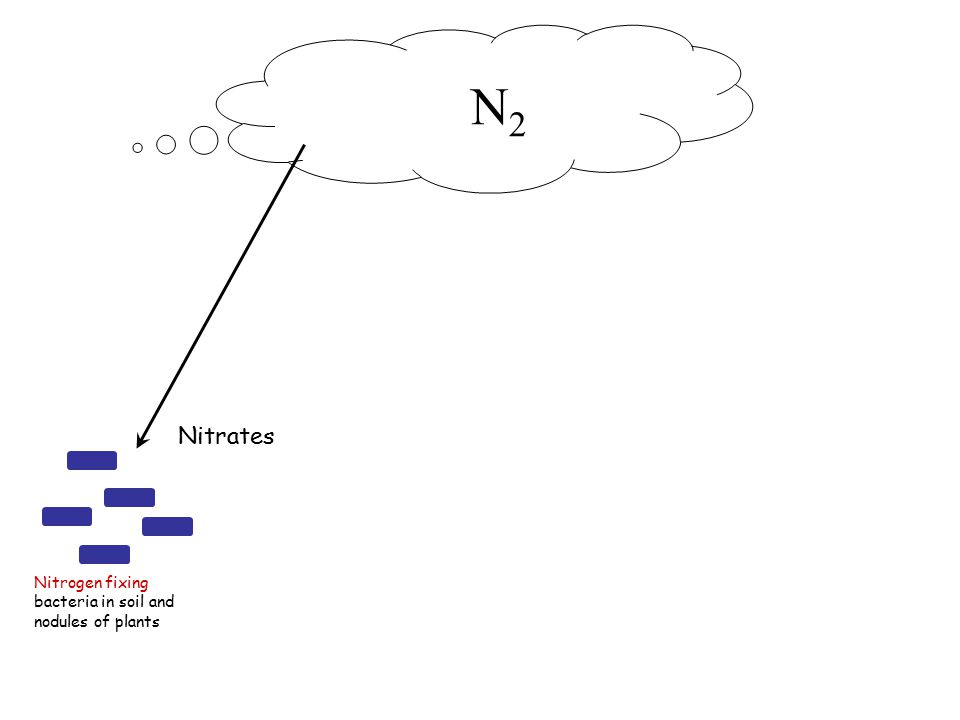Nitrogen fixing bacteria in soil and nodules of plants Nitrates