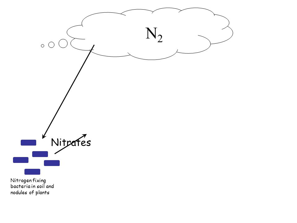 N 2 Nitrogen fixing bacteria in soil and nodules of plants NO 3 -