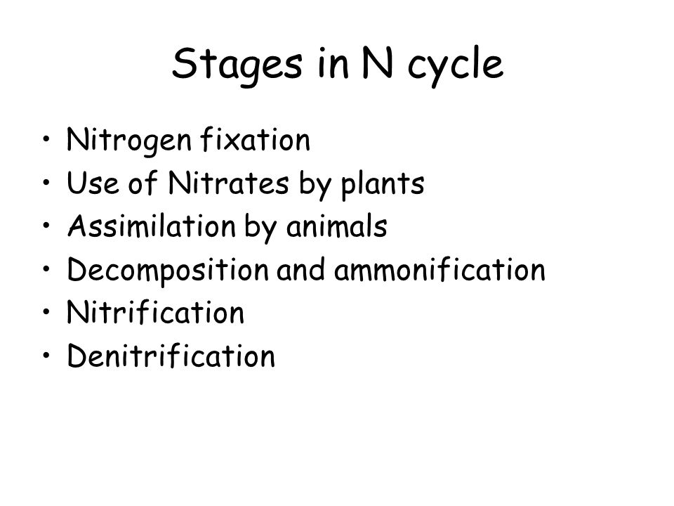 Stages in N cycle Nitrogen fixation Use of Nitrates by plants Assimilation by animals Decomposition and ammonification Nitrification Denitrification