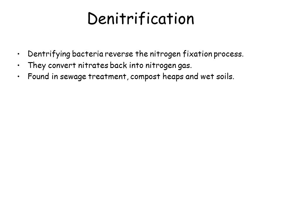 Denitrification Dentrifying bacteria reverse the nitrogen fixation process.