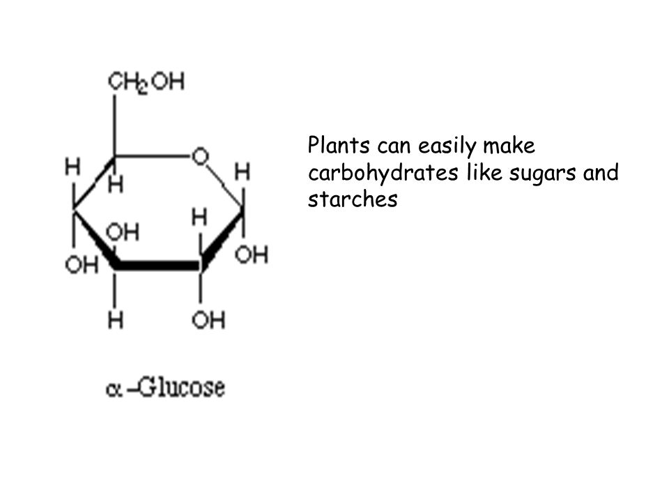 Plants can easily make carbohydrates like sugars and starches