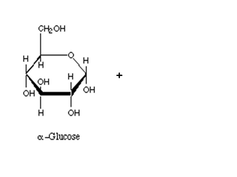 NO 3 - + nitrate ions need to be added to carbohydrates to make amino-acids