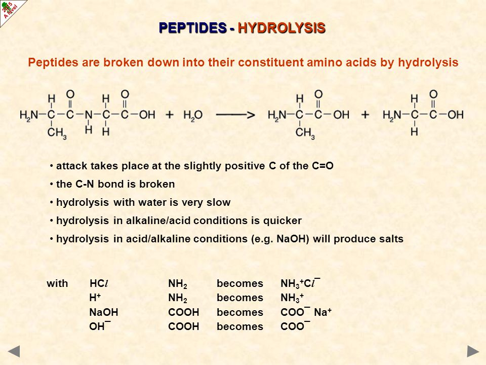 PEPTIDES - HYDROLYSIS Peptides are broken down into their constituent amino acids by hydrolysis H 2 N C CO CH 3 H NH C CO H H NH C COOH CH 3 Which amino acids are formed?