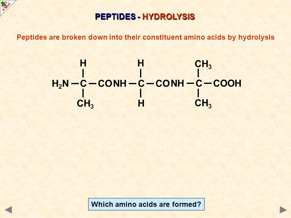 PEPTIDES - HYDROLYSIS Peptides are broken down into their constituent amino acids by hydrolysis H 2 N C CO CH 3 H NH C CO H H NH C COOH CH 3 H H 2 N C COOH H H CH 3 H 2 N C COOH ++