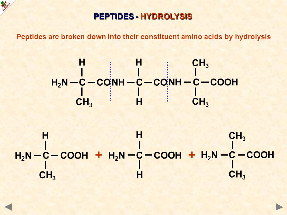 H 2 N C CO CH 3 H NH C CO H H NH C COOH H CH 3 PEPTIDES - HYDROLYSIS Peptides are broken down into their constituent amino acids by hydrolysis Which amino acids are formed?