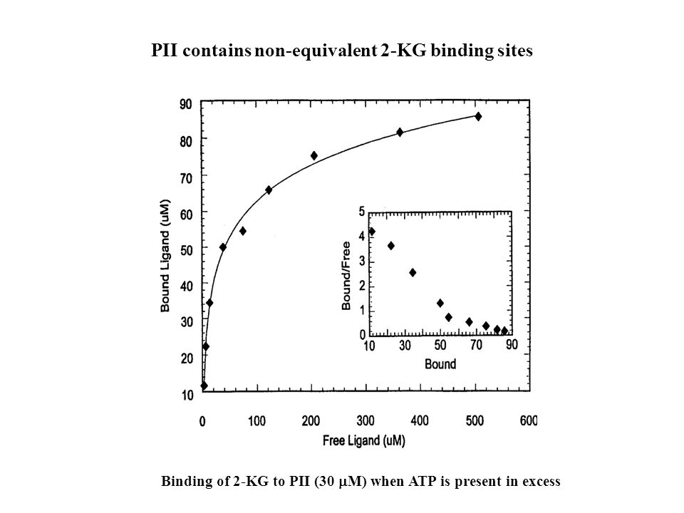 Binding of 2-KG to PII (30  M) when ATP is present in excess PII contains non-equivalent 2-KG binding sites