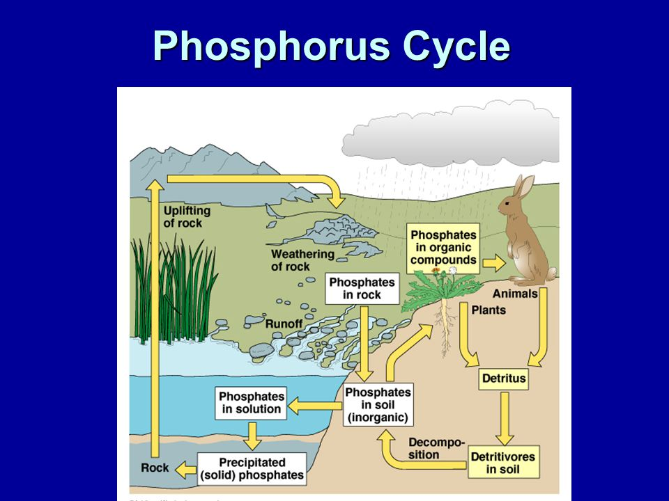 Eutrophication Effects (in pictures) Also check out: http://en.wikipedia.org/wiki/Eutrophication