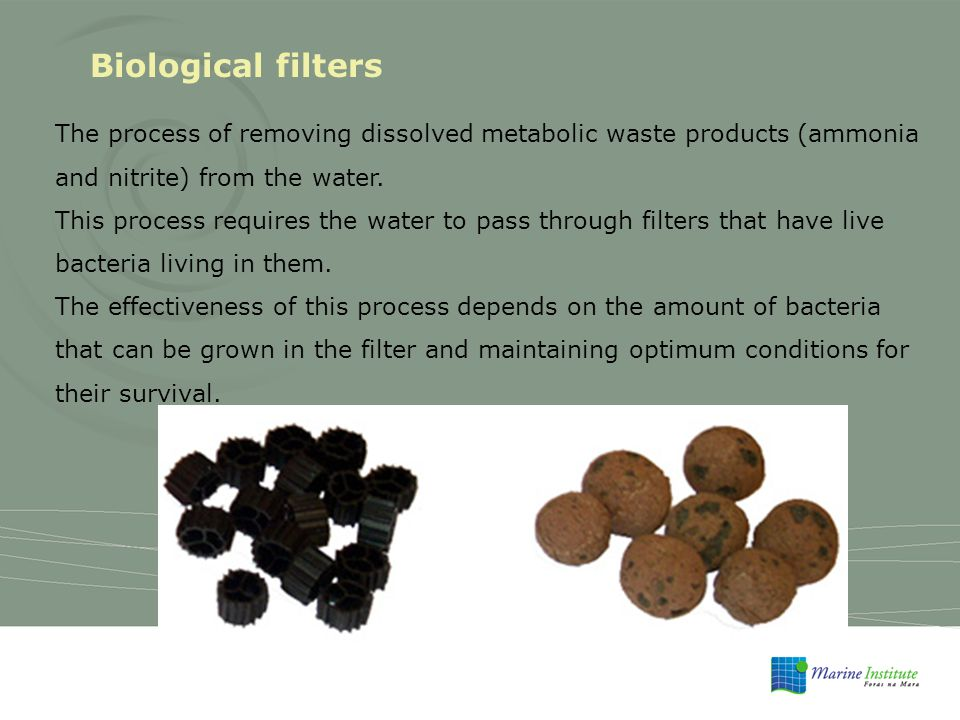 Biological filters The process of removing dissolved metabolic waste products (ammonia and nitrite) from the water.