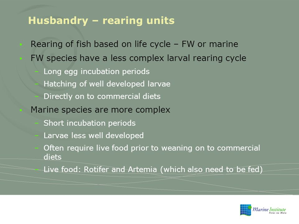Husbandry – rearing units  Rearing of fish based on life cycle – FW or marine  FW species have a less complex larval rearing cycle –Long egg incubation periods –Hatching of well developed larvae –Directly on to commercial diets  Marine species are more complex –Short incubation periods –Larvae less well developed –Often require live food prior to weaning on to commercial diets –Live food: Rotifer and Artemia (which also need to be fed)