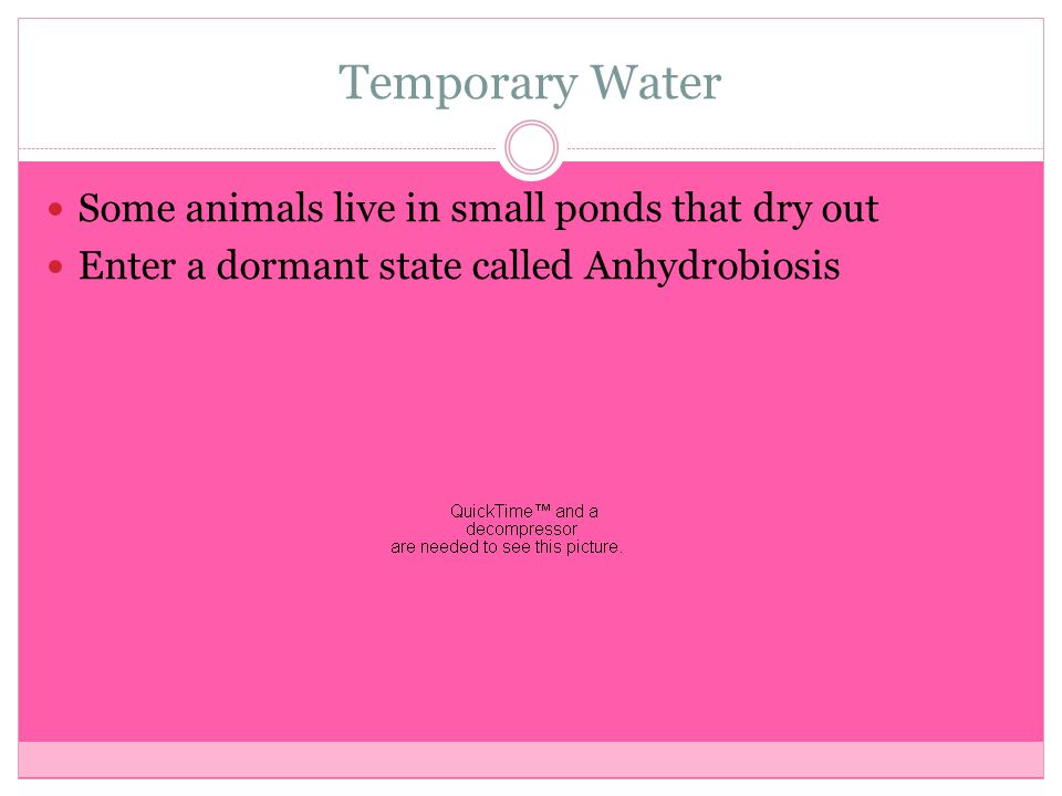 Temporary Water Some animals live in small ponds that dry out Enter a dormant state called Anhydrobiosis