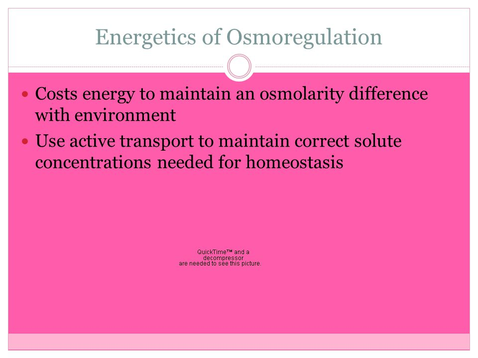Energetics of Osmoregulation Costs energy to maintain an osmolarity difference with environment Use active transport to maintain correct solute concen