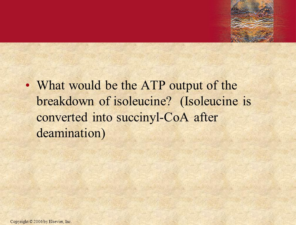 Copyright © 2006 by Elsevier, Inc. What would be the ATP output of the breakdown of isoleucine.