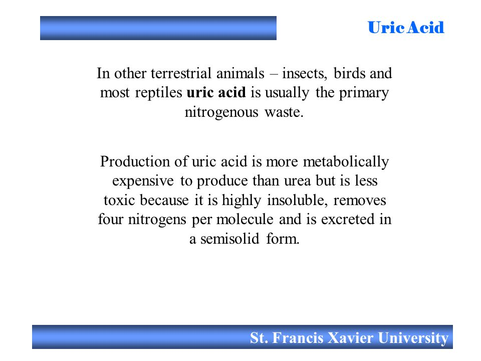 St. Francis Xavier University Uric Acid In other terrestrial animals – insects, birds and most reptiles uric acid is usually the primary nitrogenous w