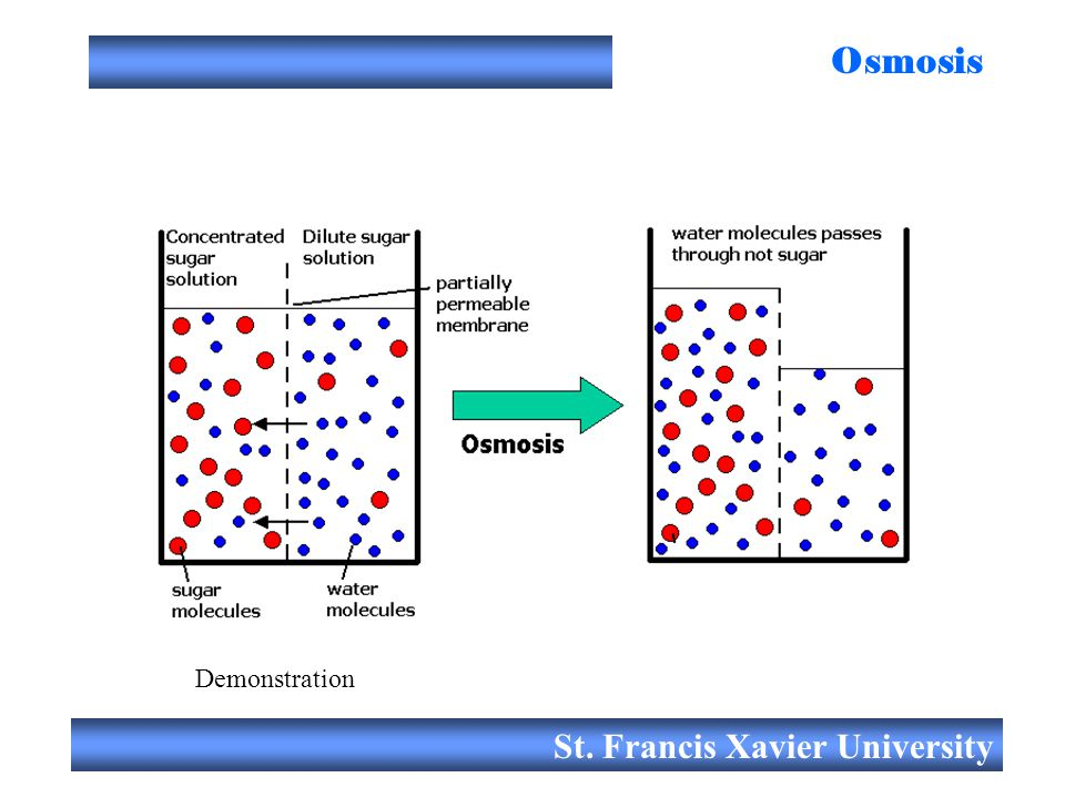St. Francis Xavier University Osmosis Demonstration
