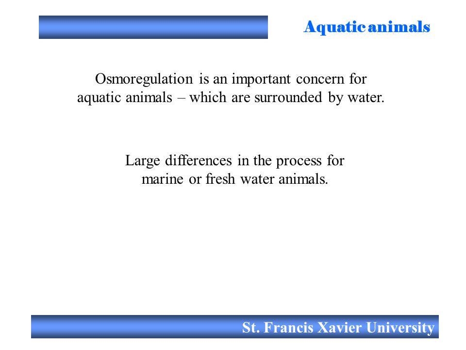 St. Francis Xavier University Aquatic animals Osmoregulation is an important concern for aquatic animals – which are surrounded by water. Large differ