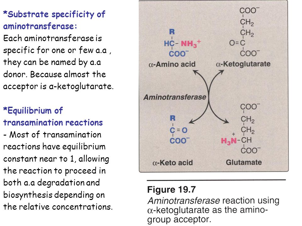 *Substrate specificity of aminotransferase: Each aminotransferase is specific for one or few a.a, they can be named by a.a donor. Because almost the a