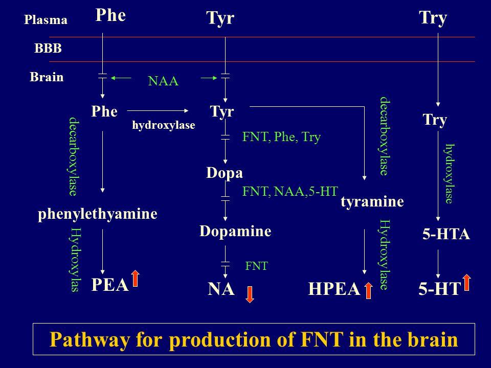 Phe Tyr Try Plasma BBB Brain hydroxylase NAA PheTyr Dopa Dopamine NA phenylethyamine PEA tyramine HPEA 5-HTA 5-HT Try decarboxylase hydroxylase FNT, Phe, Try FNT, NAA,5-HT FNT decarboxylase Pathway for production of FNT in the brain Hydroxylas Hydroxylase