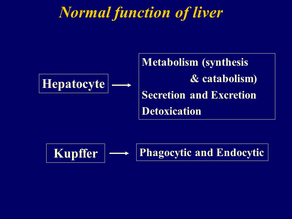 Normal function of liver Kupffer Metabolism (synthesis & catabolism) Secretion and Excretion Detoxication Hepatocyte Phagocytic and Endocytic