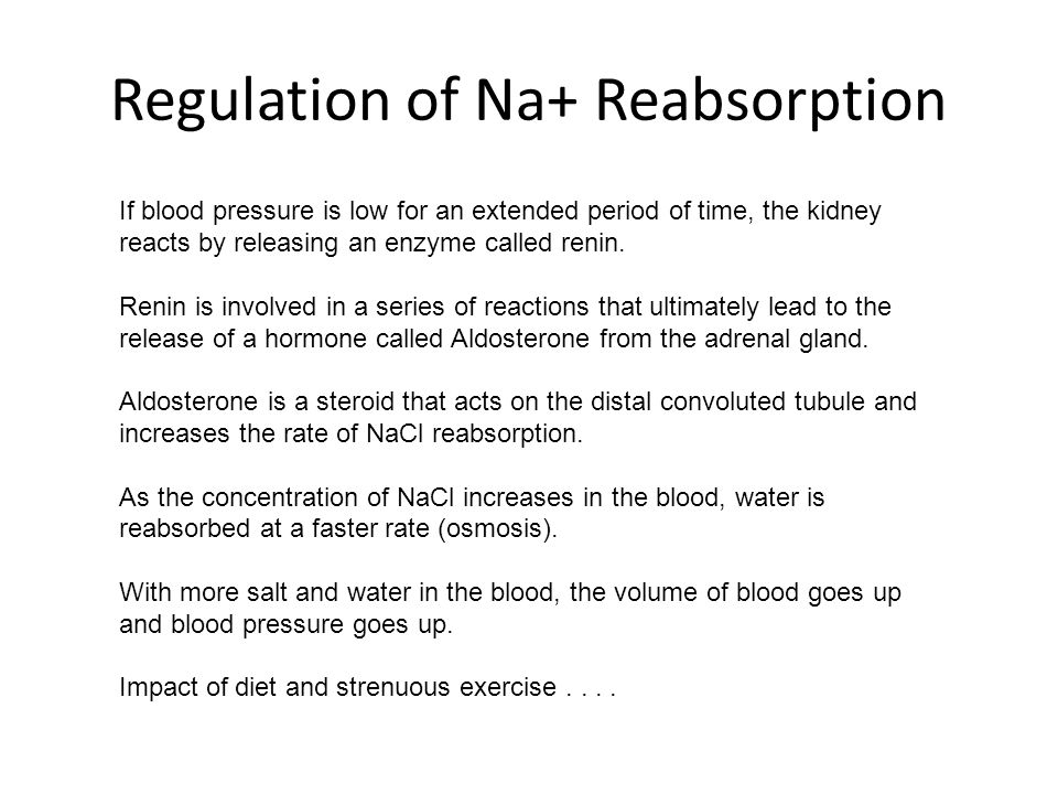 Regulation of Na+ Reabsorption If blood pressure is low for an extended period of time, the kidney reacts by releasing an enzyme called renin. Renin i