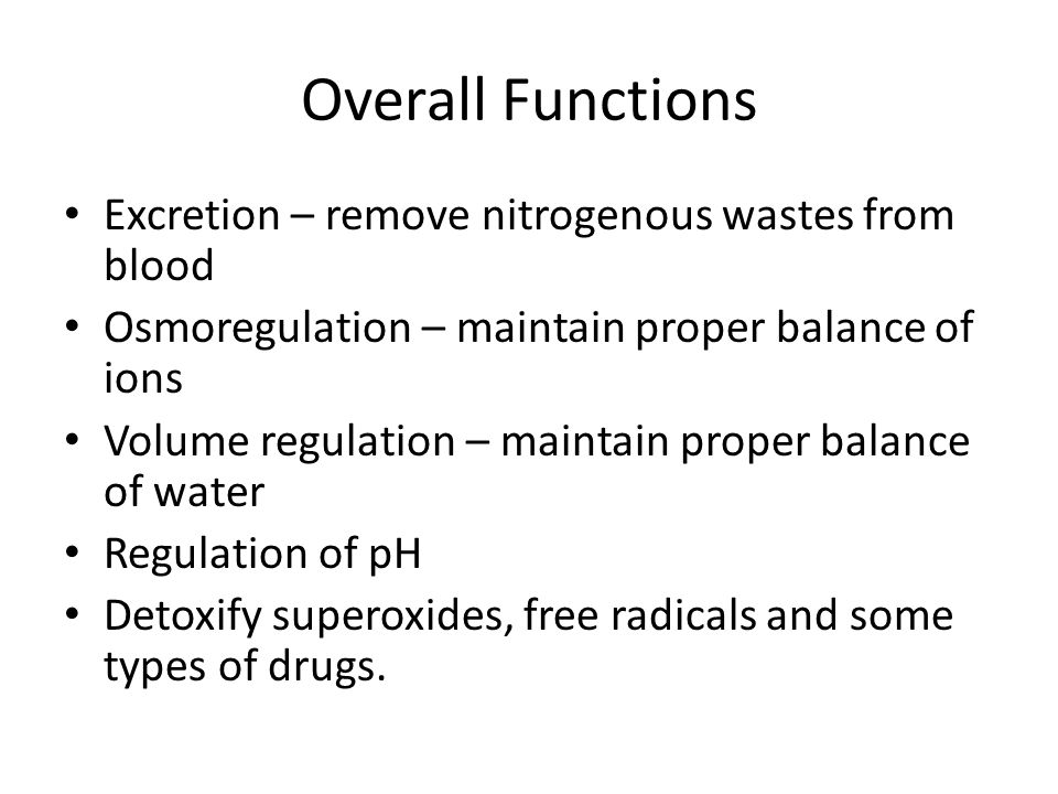Overall Functions Excretion – remove nitrogenous wastes from blood Osmoregulation – maintain proper balance of ions Volume regulation – maintain prope
