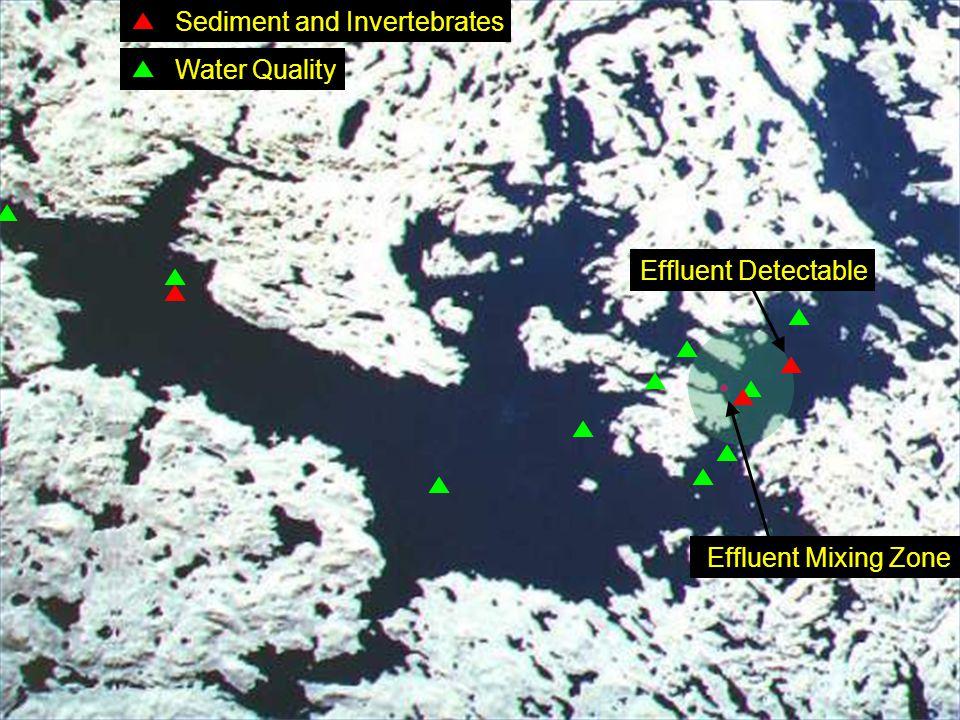 Effluent Detectable Effluent Mixing Zone Sediment and Invertebrates Water Quality