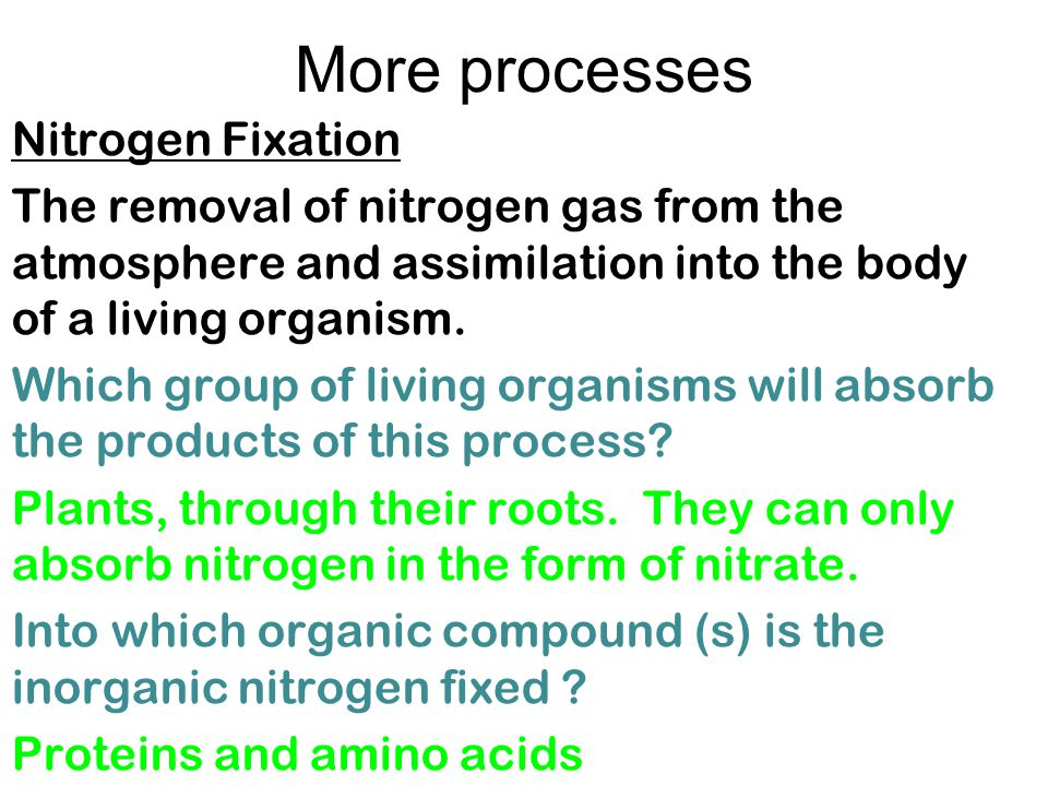 More processes Nitrogen Fixation The removal of nitrogen gas from the atmosphere and assimilation into the body of a living organism.
