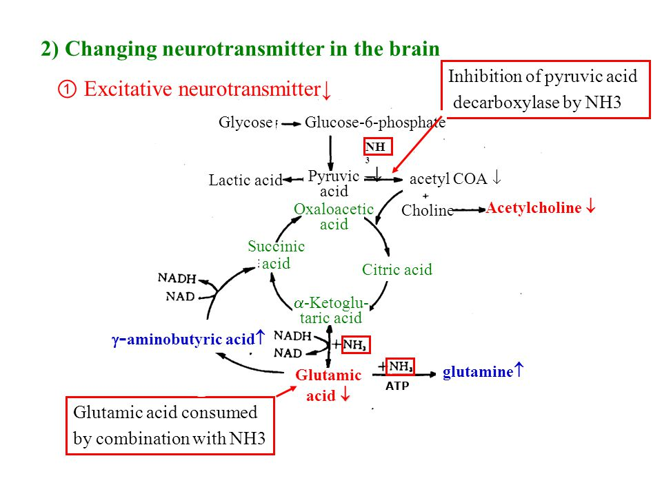 20 2) Changing neurotransmitter in the brain ① Excitative neurotransmitter↓ Glutamic acid consumed by combination with NH3 Inhibition of pyruvic acid decarboxylase by NH3 glutamine   - aminobutyric acid  acetyl COA  NH 3  Glutamic  acid  GlycoseGlucose-6-phosphate Pyruvic acid Lactic acid Oxaloacetic acid Citric acid Succinic acid  -Ketoglu- taric acid ATP Choline Acetylcholine 