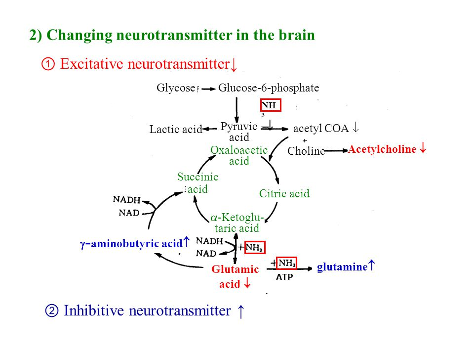 21 ② Inhibitive neurotransmitter ↑ ① Excitative neurotransmitter↓ 2) Changing neurotransmitter in the brain glutamine   - aminobutyric acid  acetyl COA  NH 3  Glutamic  acid  GlycoseGlucose-6-phosphate Pyruvic acid Lactic acid Oxaloacetic acid Citric acid Succinic acid  -Ketoglu- taric acid ATP Choline Acetylcholine 