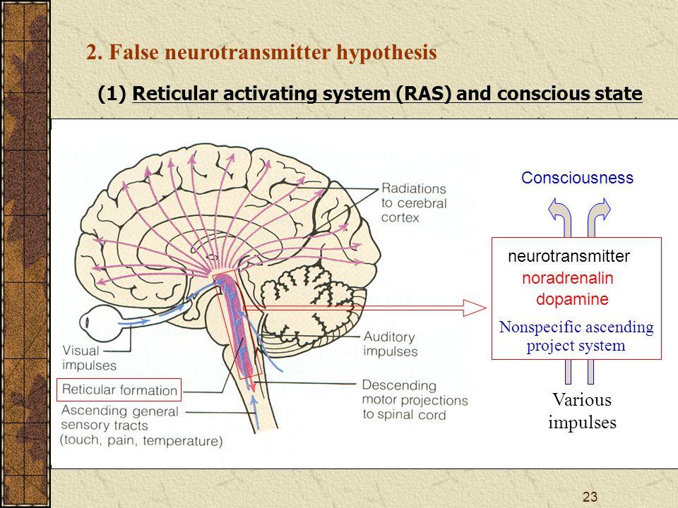 24 (2) True and false neurotransmitter phenylethanolamine Octopamine —CHOHCH 2 NH 2 HO — —CHOHCH 2 NH 2 True neurotransmitter False neurotransmitter noradrenalin HO — —CHOHCH 2 NH 2 HO — —CHCH 2 NH 2 dopamine