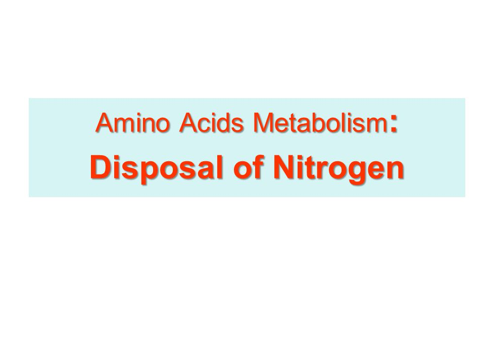Amino Acids Metabolism Removal of Nitrogen from Amino Acids Removing the -amino group Essential for producing energy from any amino acidEssential for producing energy from any amino acid An obligatory step for the catabolism of all amino acidsAn obligatory step for the catabolism of all amino acids