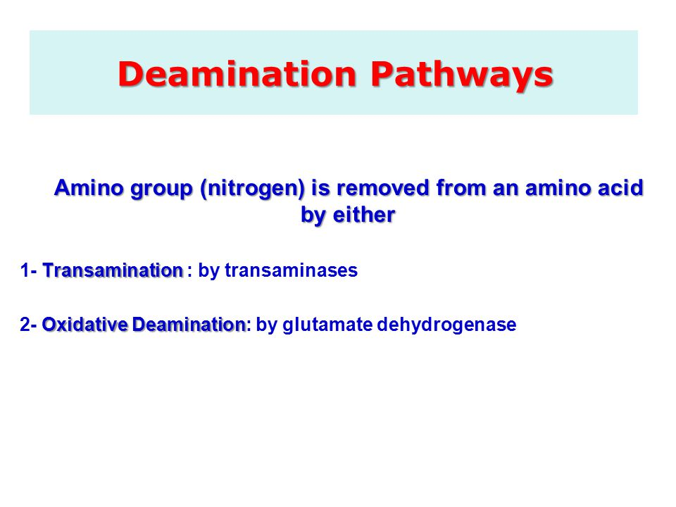 Deamination Pathways Amino group (nitrogen) is removed from an amino acid by either Transamination 1- Transamination : by transaminases Oxidative Deamination 2- Oxidative Deamination: by glutamate dehydrogenase
