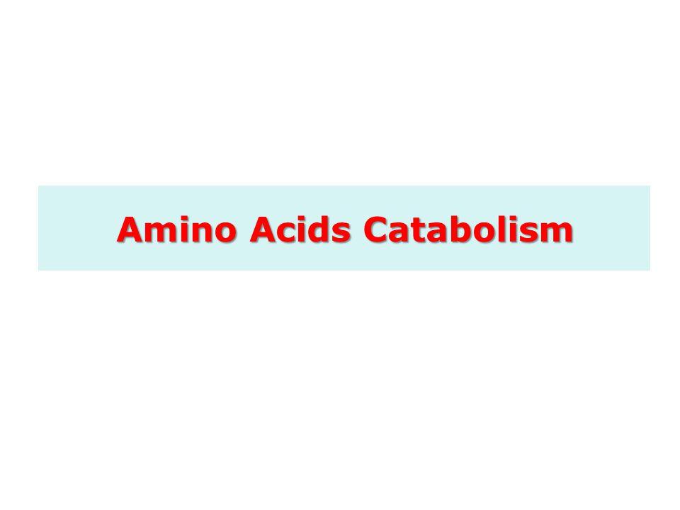 Amino Acids Catabolism