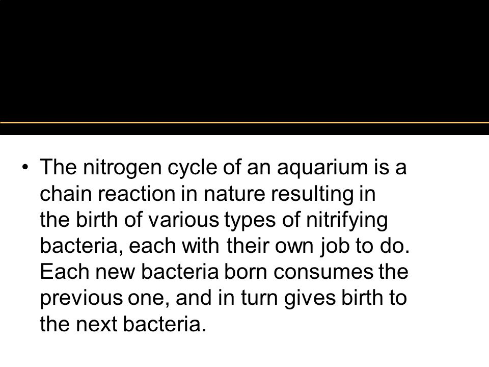 Nitrogen Cycle The nitrogen cycle of an aquarium is a chain reaction in nature resulting in the birth of various types of nitrifying bacteria, each wi
