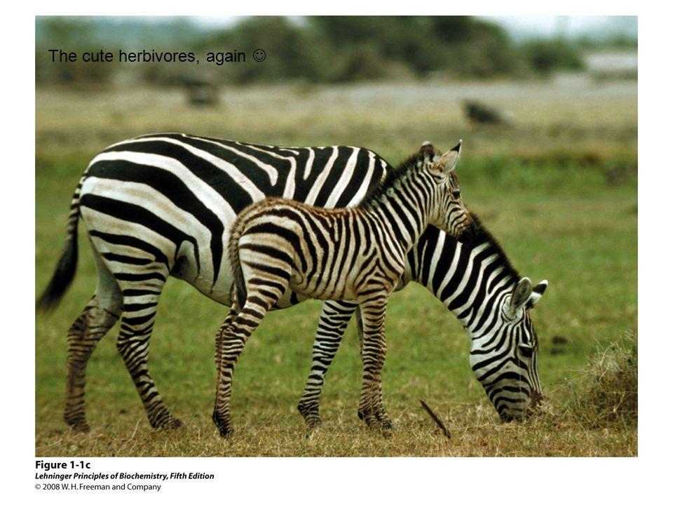 The cute herbivores, again