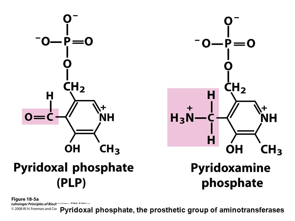 Pyridoxal phosphate, the prosthetic group of aminotransferases