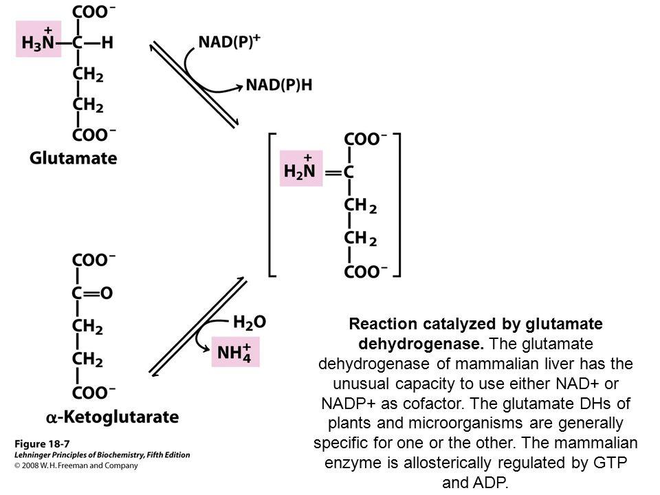 Reaction catalyzed by glutamate dehydrogenase.