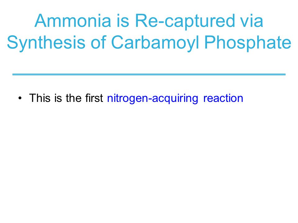 Ammonia is Re-captured via Synthesis of Carbamoyl Phosphate This is the first nitrogen-acquiring reaction