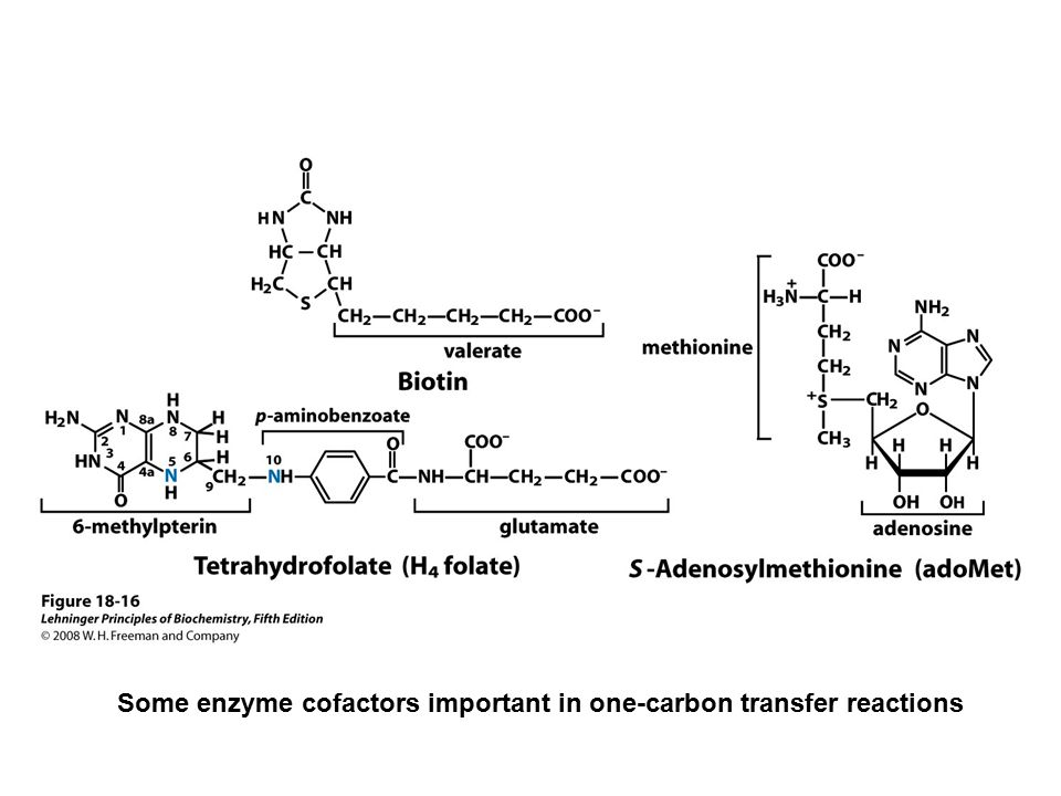 Some enzyme cofactors important in one-carbon transfer reactions