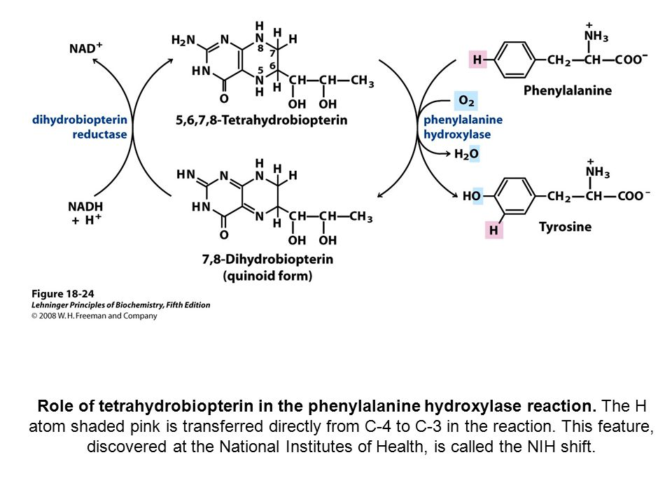 Role of tetrahydrobiopterin in the phenylalanine hydroxylase reaction.