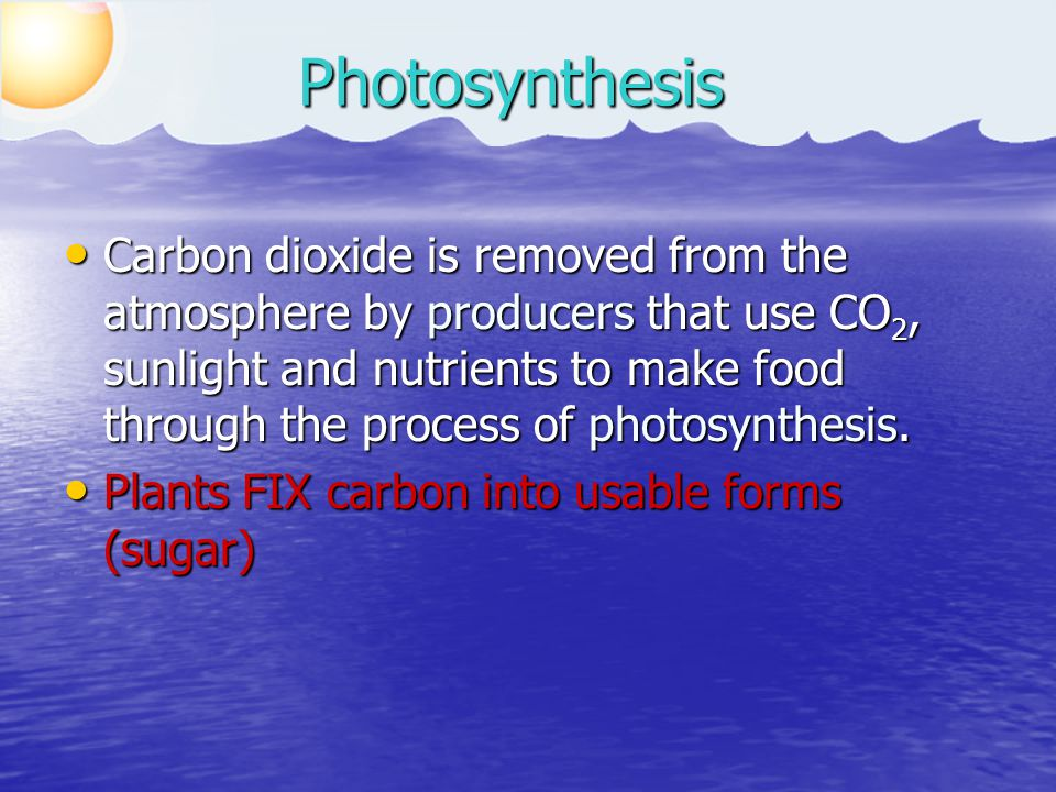 Carbon dioxide is removed from the atmosphere by producers that use CO 2, sunlight and nutrients to make food through the process of photosynthesis. C