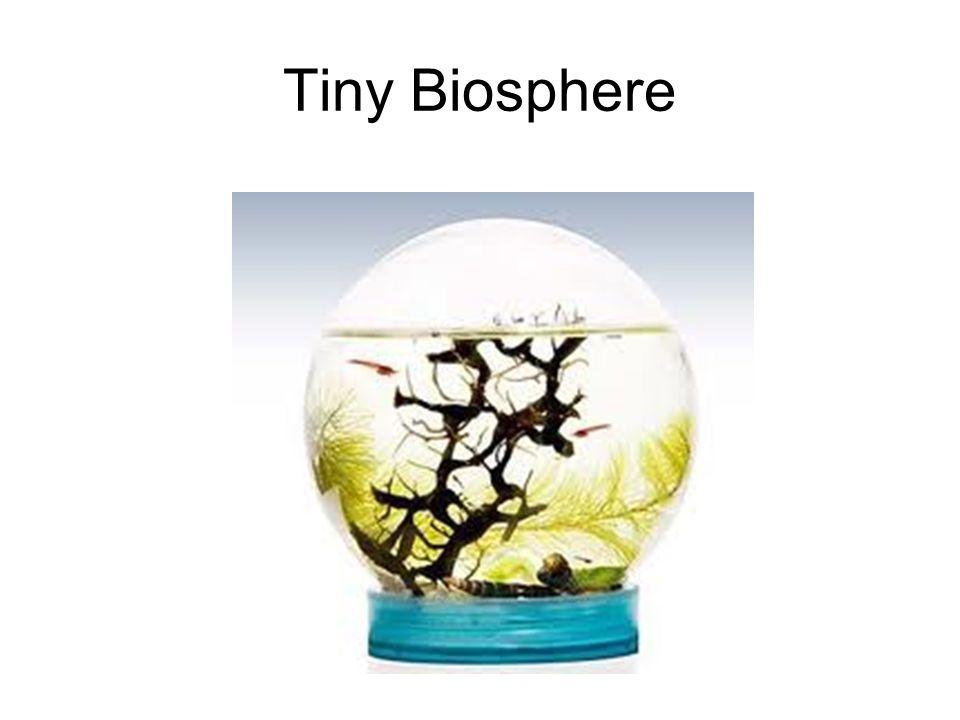 Tiny Biosphere