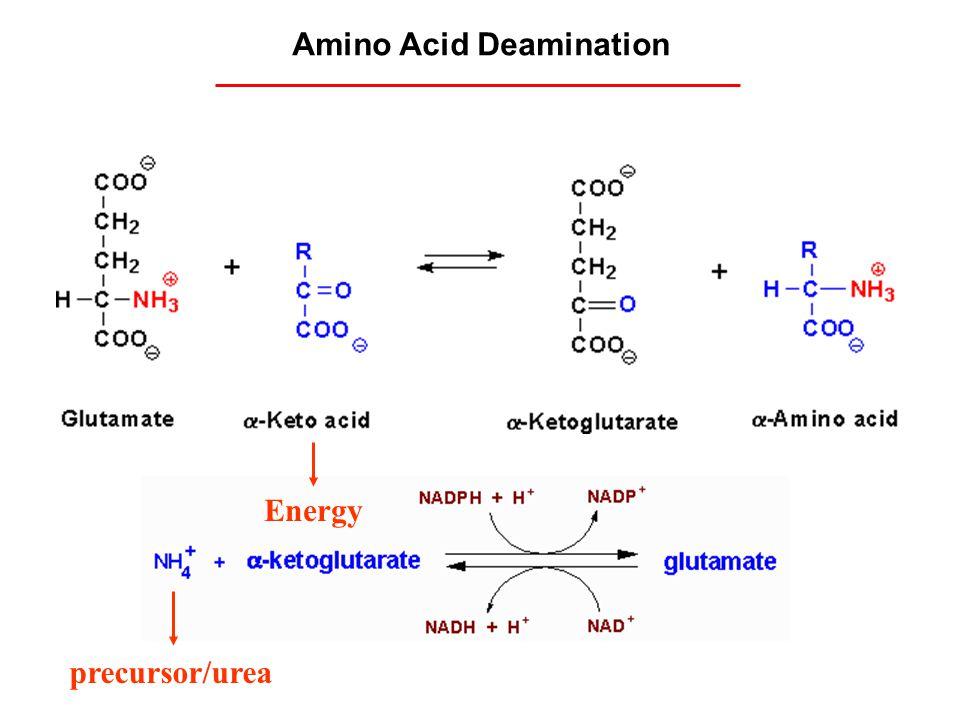 precursor/urea Amino Acid Deamination Energy