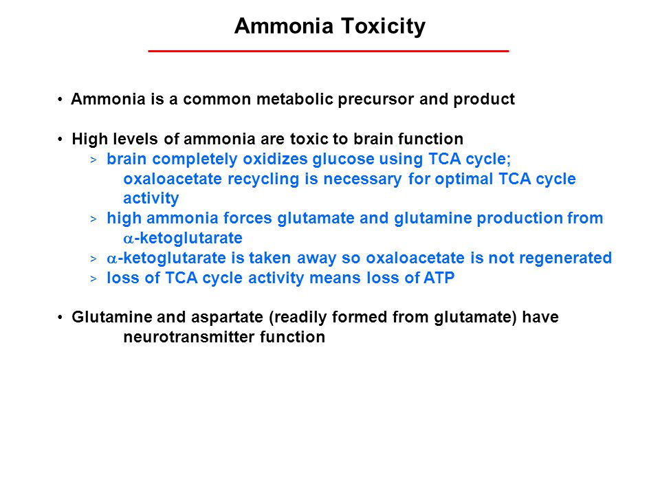 Ammonia Toxicity Ammonia is a common metabolic precursor and product High levels of ammonia are toxic to brain function > brain completely oxidizes gl