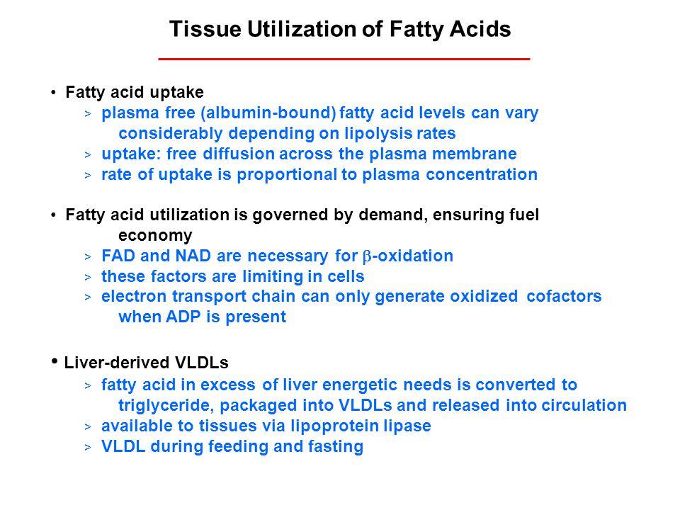 Tissue Utilization of Fatty Acids Fatty acid uptake > plasma free (albumin-bound) fatty acid levels can vary considerably depending on lipolysis rates