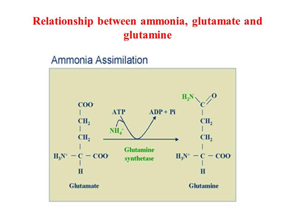 Relationship between ammonia, glutamate and glutamine