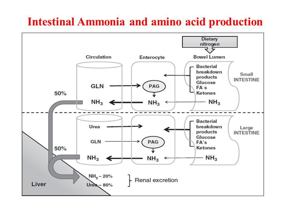 Intestinal Ammonia and amino acid production